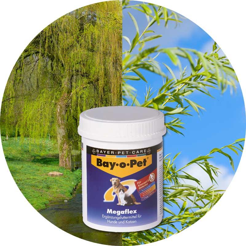 Bayer Weide - BayoPet