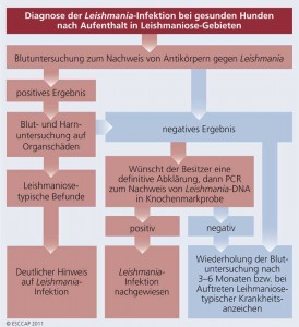 Diagnose der Leishmaniose