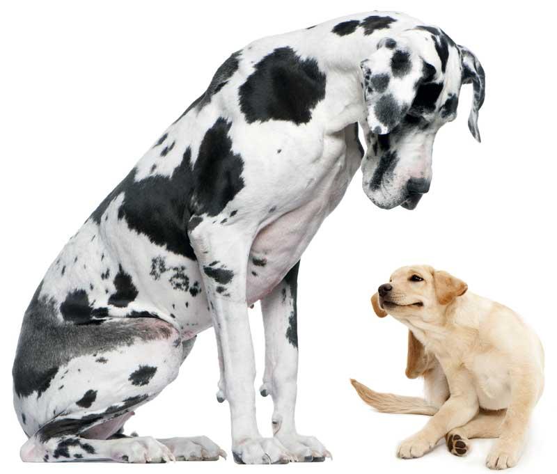 RC Hund, Allergie