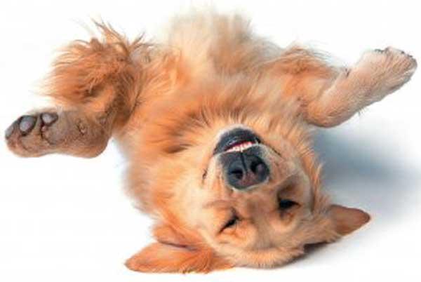 Virbac - Juckreiz bei Hund und Katze
