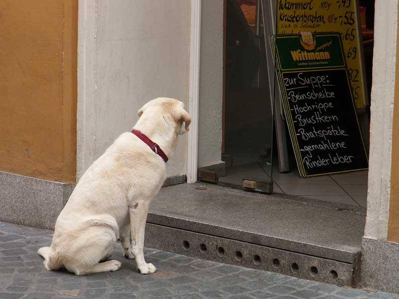 Hundeernährung - Helmut J. Salzer