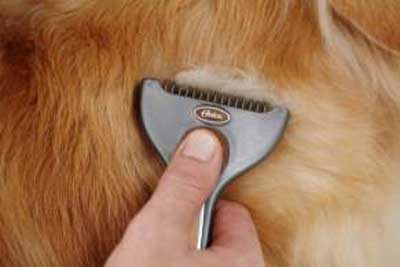 Oster Animal Care - Fellpflege im Frühjahr