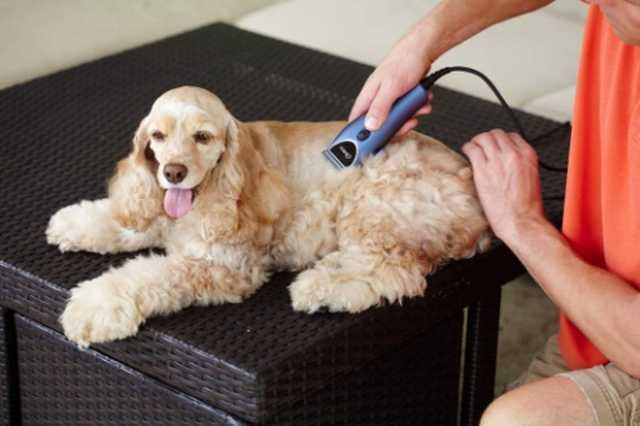 Oster™ Animal Care - Fellpflege