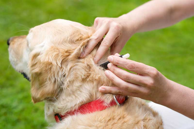 ESCCAP - Studie Zeckenschutz beim Hund