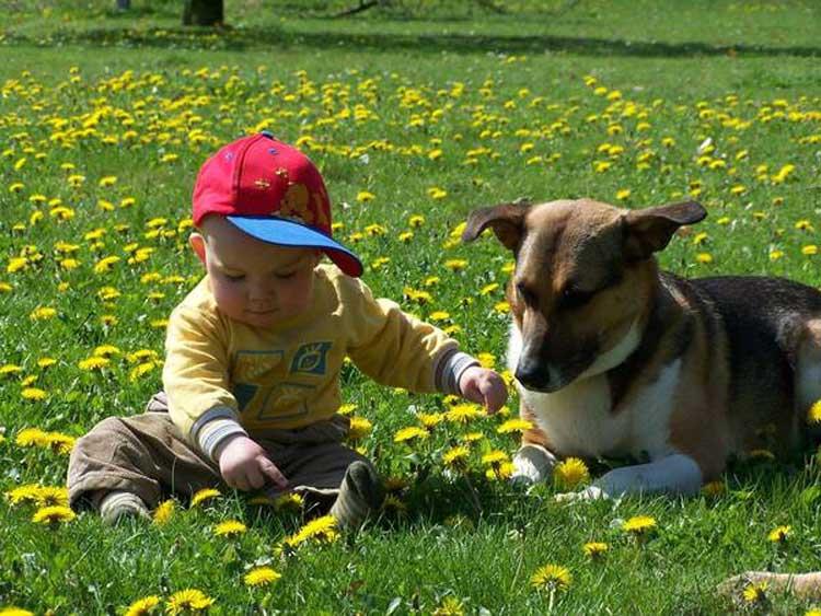 IVH - Gesund mit Hund