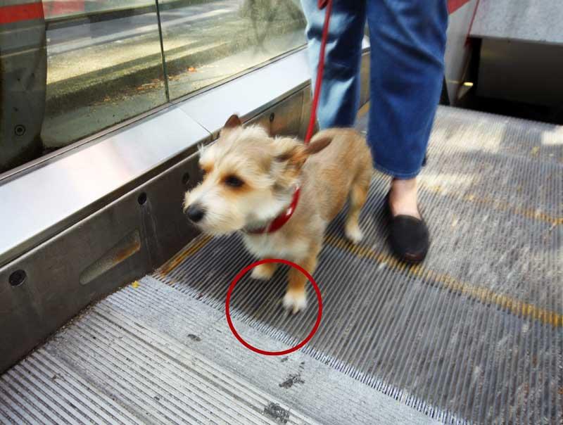 Tasso - Keine Hunde auf der Rolltreppe