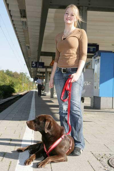 IVH - Zug fahren mit Hund