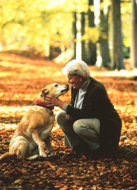ivh - Waldspaziergang mit Hund