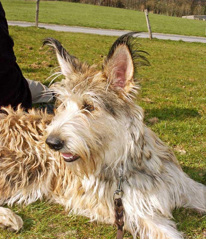 Flederhund. Foto: magicpen