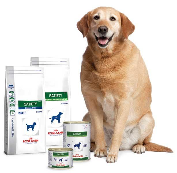 Adipositas Satiety Hund
