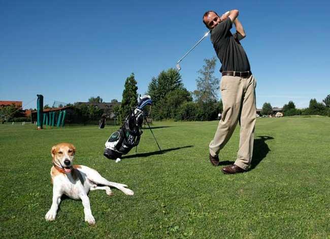 Golfen mit Hund. Foto: ivh
