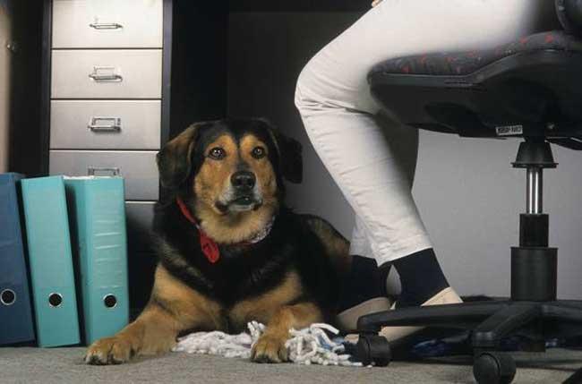 Teamkollege Hund. Foto: ivh