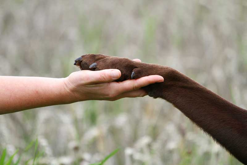 Partner Hund. Foto: Oliver-Haja