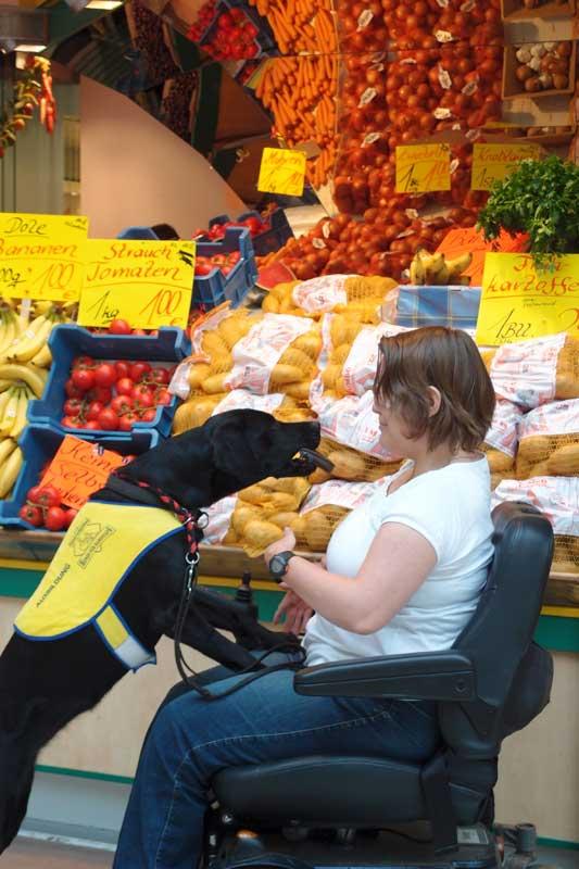 Begleithunde sind für ihre Halter eine wichtige Stütze im Alltag, so auch beim Lebensmitteleinkauf