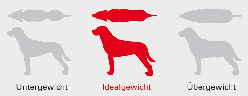 Idealgewicht-Hund, Royal Canin