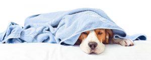 Gezielte Hilfe bei Magen-Darm-Problemen beim Hund. Foto: ©-Igor-Norman