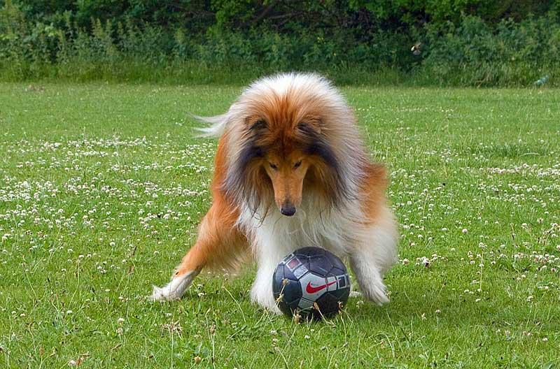 Trendsport Treibball für Mensch und Hund