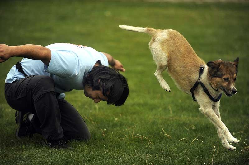 Hundesport Agility. Foto: Vier-Pfoten
