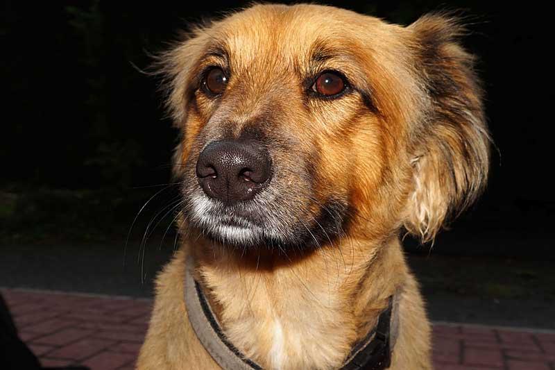 dog-418755_1280_pb
