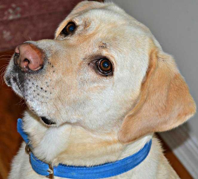 Tierische Nulldiät – Hunde bei Mahlzeiten ignorieren