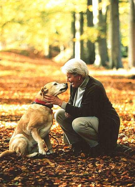 Waldspaziergang mit dem Hund macht einfach Spaß. Foto: IVH