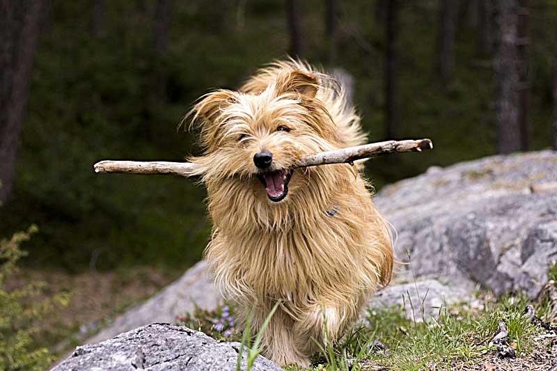 Zahngesundheit beim Hund ist wichtig.