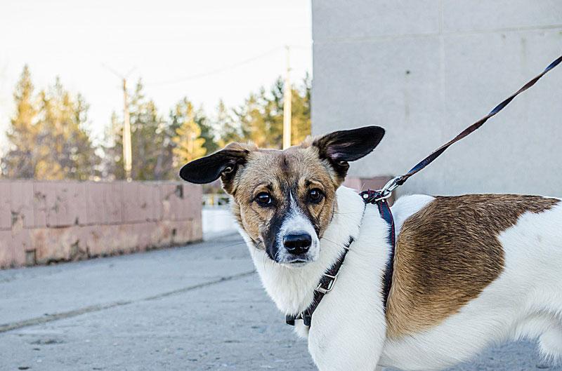 Einkaufen mit dem Hund - eine unterschätzte Gefahr
