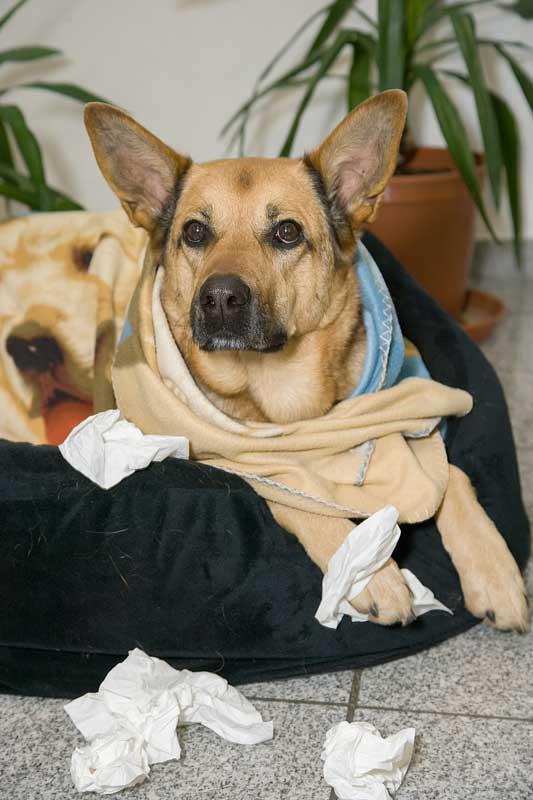 Hunde können sich genauso erkälten wie Menschen. Foto: © VIER PFOTEN, Tibor Rauch