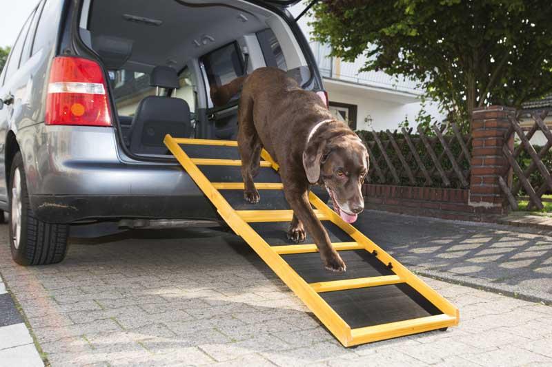 Im Alter leidet auch die Beweglichkeit der Hunde. Kreative Ideen sind dann gefragt, um dem vierbeinigen Hausgenossen das Leben zu erleichtern. Foto: BfT/Klostermann