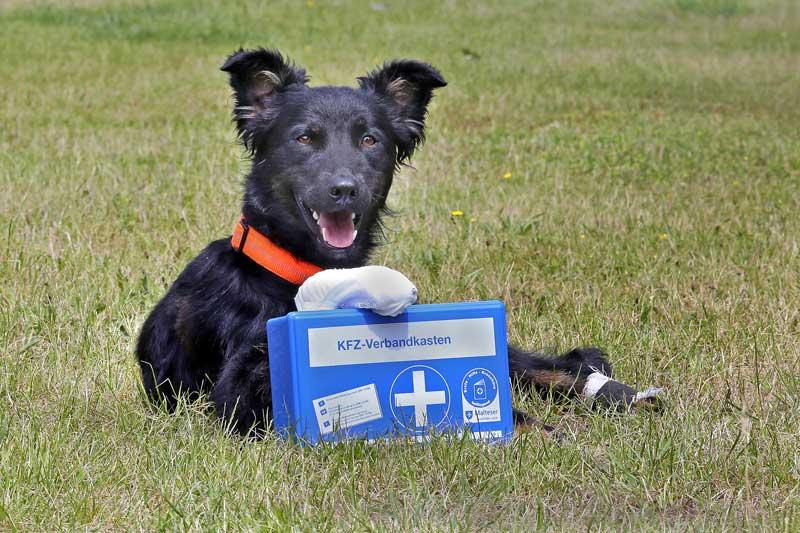 Erste Hilfe beim Hund(Foto: Andrea Klostermann/BfT)