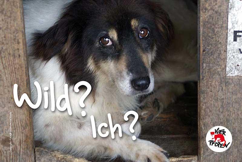 Wild? Ich?-Kampagne (Foto: © VIER PFOTEN)