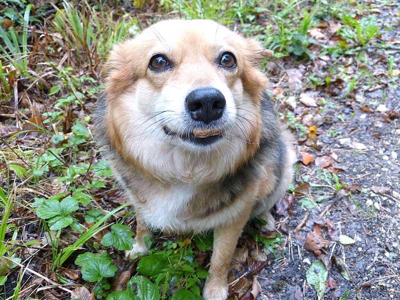 Giftköder: Der Hund sollte nichts vom Boden aufzunehmen