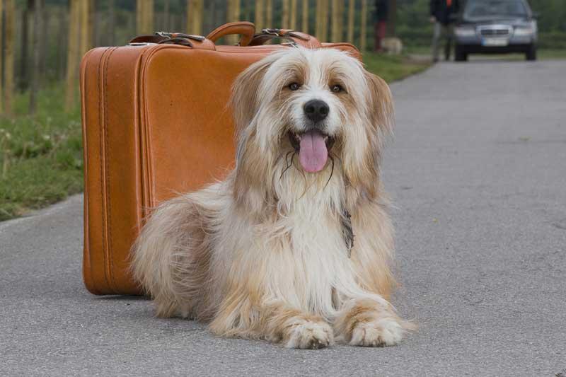 Mit dem Hund auf Reisen (Foto: Andrea Klostermann/BfT)