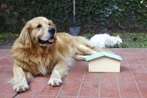 Hundehütte im Gemeinschaftsgarten