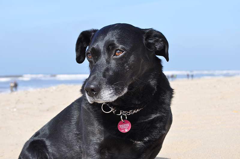 Hunde im Sommer (Foto: © TASSO e.V.)