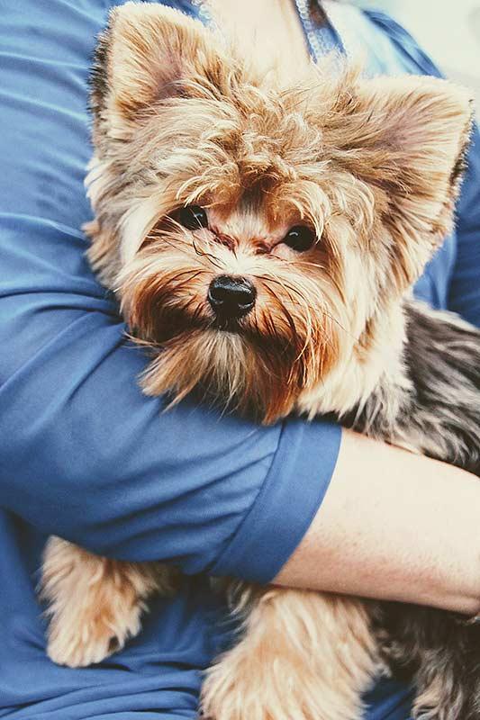 Rolltreppen: Kleine Hunde gehören auf den Arm, mit großen sollte eine normale Treppe oder der Aufzug genutzt werden.