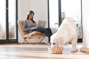 Lieber besser füttern als besser wissen: Hunde- und Katzenfutter muss alle Nährstoffe enthalten, die das Tier täglich benötigt und die es in der Natur über den Verzehr von Beutetieren bekommen würde.