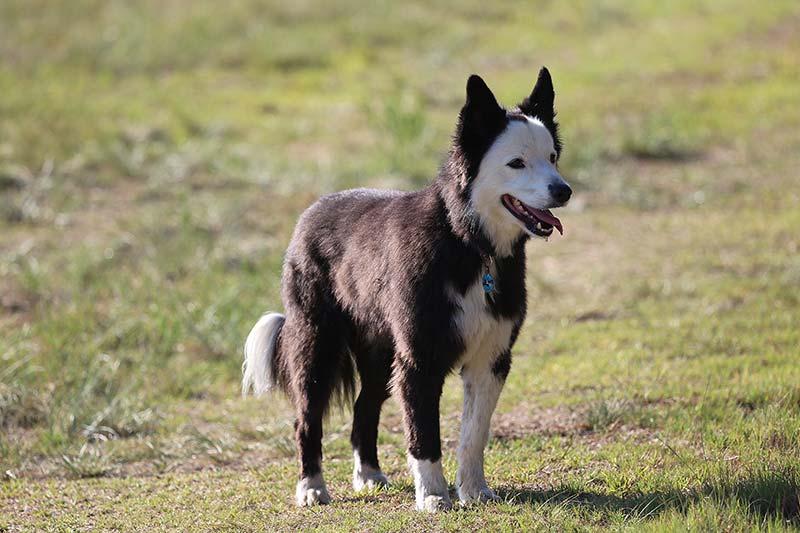 Entlaufene Hunde kehren oft an den Ort zurück, an dem sie ihre Halter zuletzt gesehen haben (Foto: © VIER PFOTEN, Monika Girardi)