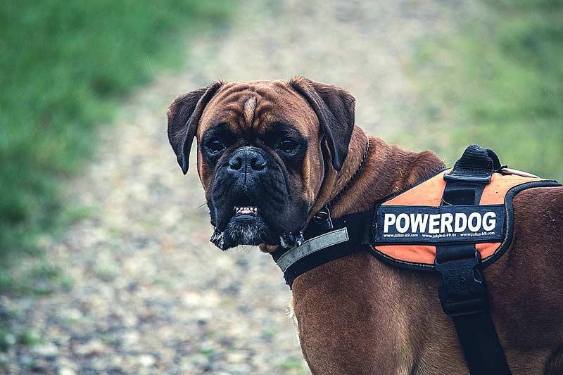 Powerdog: Zu viel Programm führt beim Hund zu Dauerstress