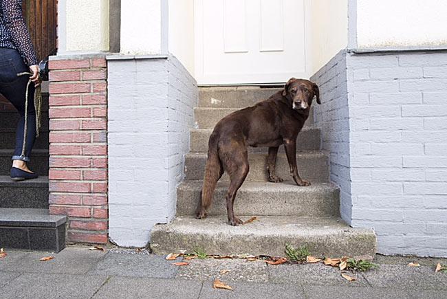 Demenzkranke Hunde sind häufig orientierungslos. Das kann so weit gehen, dass sie nicht mehr die eigene Haustür finden (Foto: BfT/Klostermann)