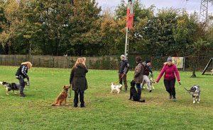 Hundetrainer müssen Experten in der Mensch-Hund-Kommunikation sein und auch mit den Hundehaltern professionell kommunizieren können (Foto: Kölner Hunde-Akademie)