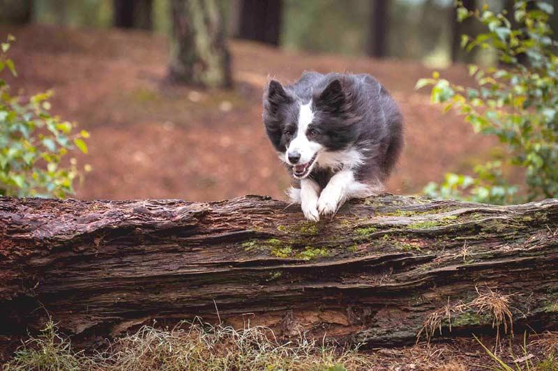 Viel bewegen – aber richtig! (Foto: Görges Naturprodukte GmbH / © Whippet Snippets)