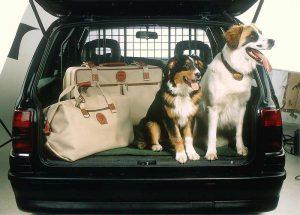 Hundehalter sollten die Reisezeiten an den Tagesablauf ihrer Tiere anpassen (Foto: IHV)