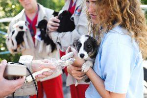 Die Streuner werden vom Tierarzt untersucht, geimpft und kastriert(Foto: © VIER PFOTEN, Tomas Halasz)