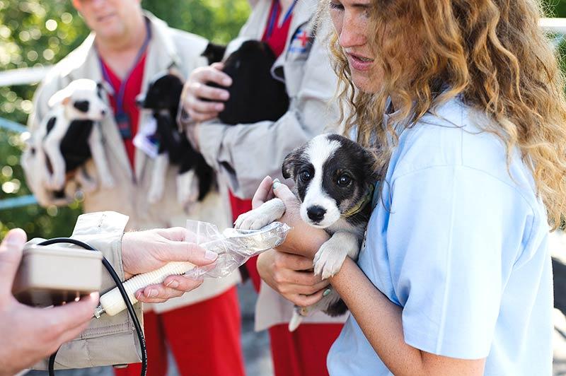 Die Streuner werden vom Tierarzt untersucht, geimpft und kastriert (Foto: © VIER PFOTEN, Tomas Halasz)