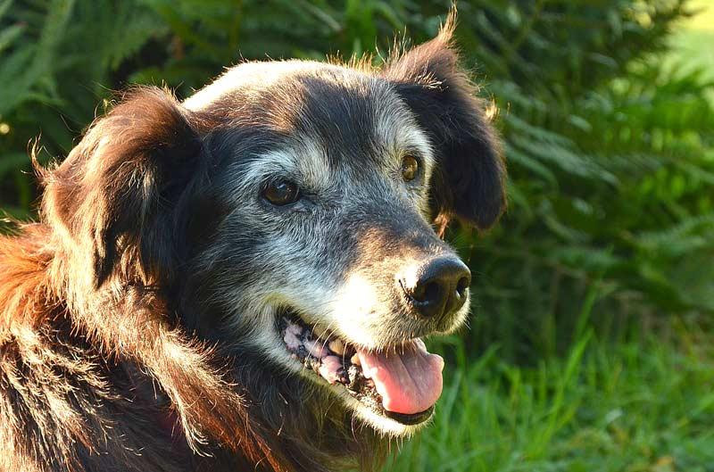 Ältere Tiere aus dem Tierheim adoptieren