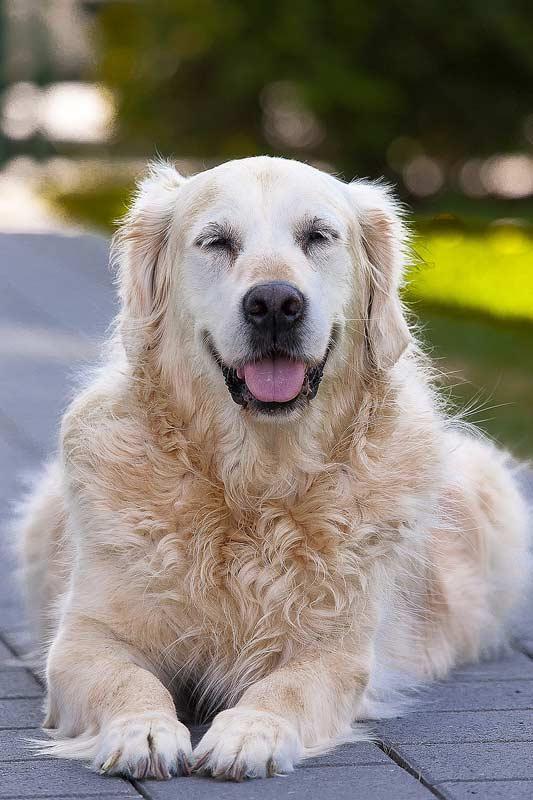 Demenz bei Tieren ist ebenso wie beim Menschen nicht heilbar