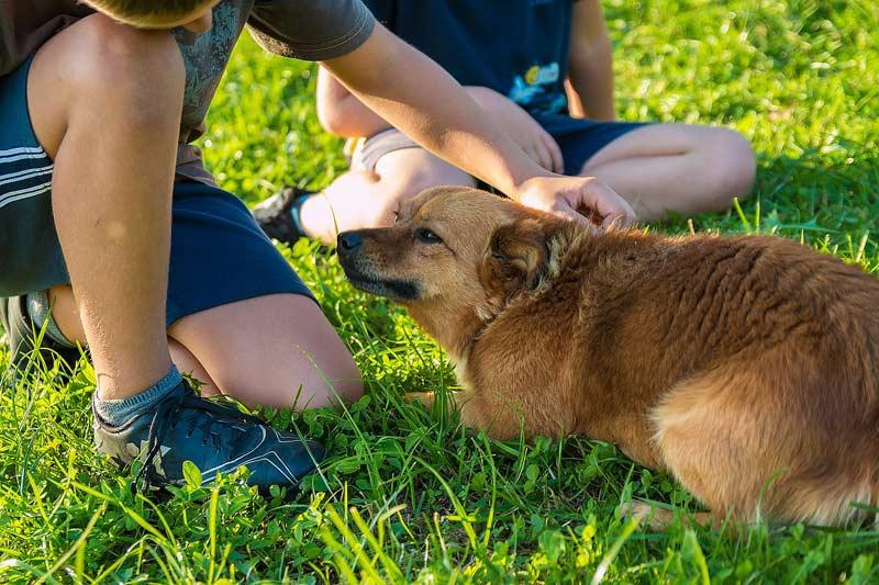Hund und Kind können sich in der Entwicklung gegenseitig positiv beeinflussen