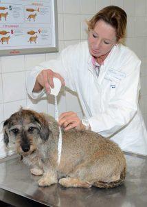 Dr. Petra Kölle untersucht zur Eröffnung der Spezial-Sprechstunde den ersten Patienten (Foto: © Medizinischen Kleintierklinik)