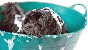 Ob kurz oder lang, lockig oder glatt: Hundehaar gehört gepflegt